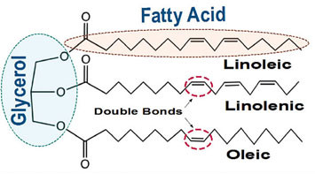 Triglyceride with Unsaturated Fatty Acids