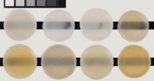 Various matte acrylic gel mediums approximately 1/4 inch. Top row are unexposed controls. Bottom row demonstrates color change after exposure to 400 hours UVA.